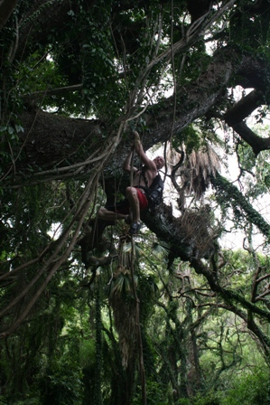 Thats me climbing a vine in Maui.