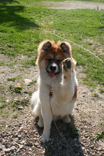 ronin waving